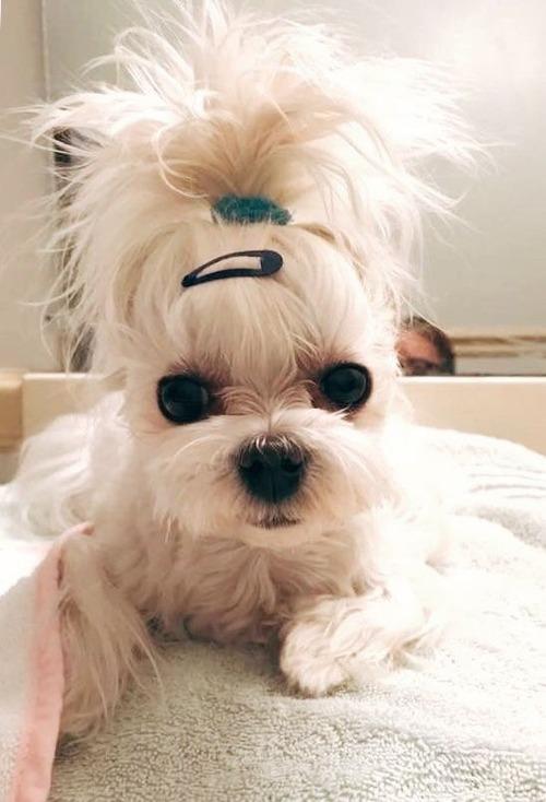 これより第一回美犬コンテストを開催します4
