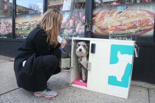 ニューヨークに「駐犬場」が出現