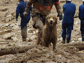 【西日本豪雨】84頭の災害救助犬が救助活動に参加3