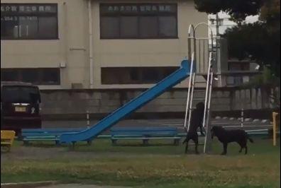 公園で犬が滑り台で遊んでた
