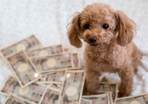 金持ちの犬はなぜトイプードルなのか