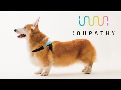 「イヌパシー」 犬と人の「絆」つくる犬専用ウエアラブル