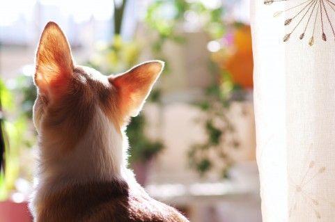 ハッと飛び起き地震を察知した2匹の犬