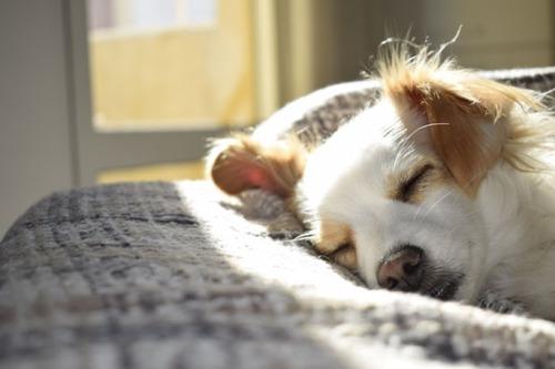 気持ち良さそうに寝てる犬の寝顔って良いよね17