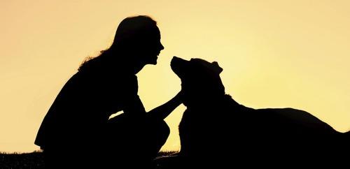 女「犬でも飼うか」