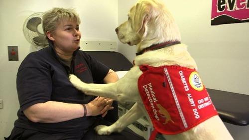 愛犬マジック、飼い主の命を「3500回救った」
