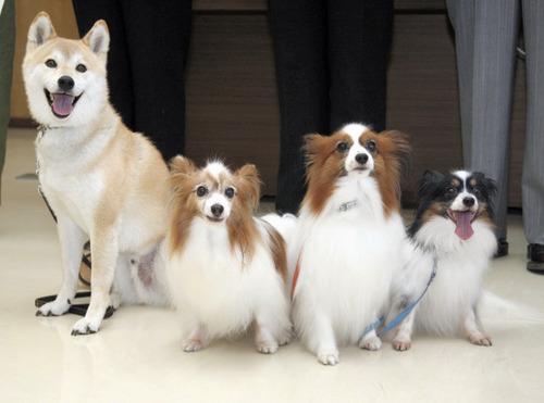 北海道警察、アホで有名な柴犬を警察犬にする