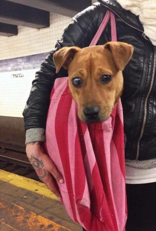 NY地下鉄「バッグに入らない動物の持ち込み禁止!」4