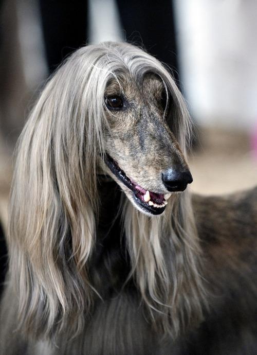 これより第一回美犬コンテストを開催します12