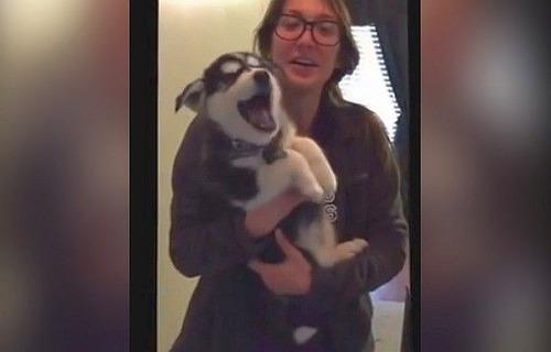 変な鳴き方をするハスキーの子犬が話題に