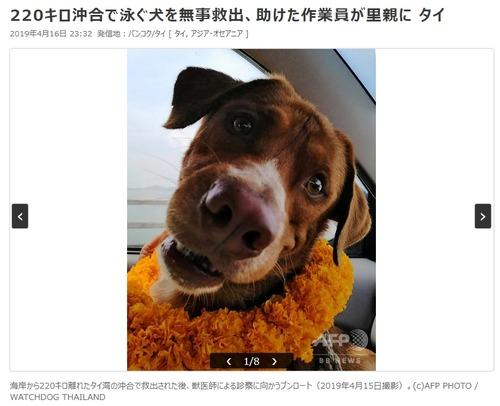 犬さん、沖合い220kmで泳いでいるところを保護される8