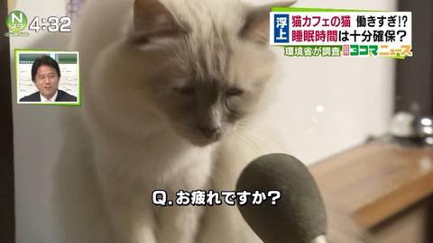 猫カフェの猫、働きすぎて労働基準違反か2
