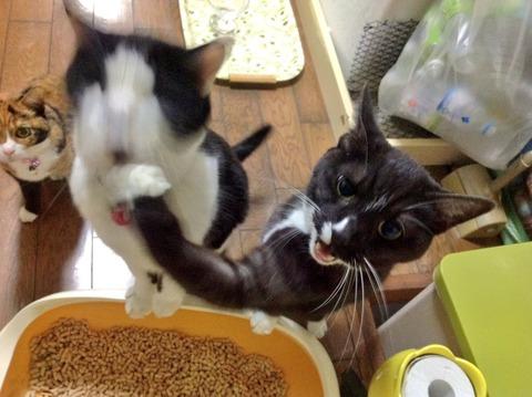 本気の猫パンチwwwww6