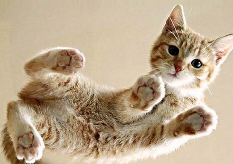 一番かわいいネコの画像3