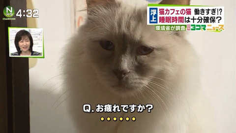 猫カフェの猫、働きすぎて労働基準違反か3