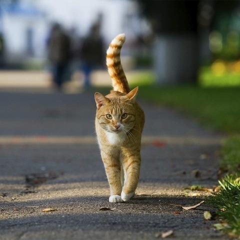 野良猫をなつかせる方法教えて