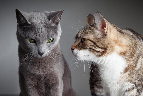 猫って一匹一匹鳴き方違うけどちゃんと会話出来てんの