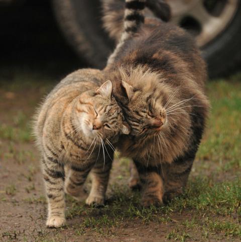 一番かわいいネコの画像13