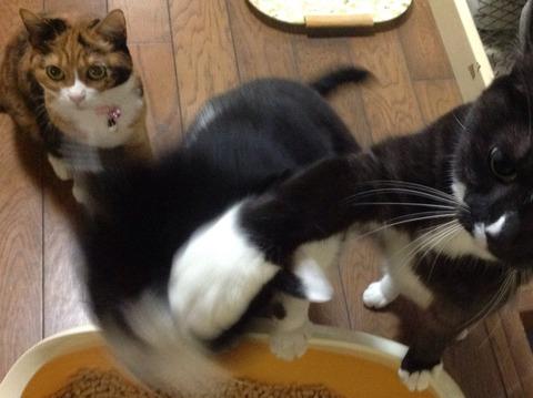 本気の猫パンチwwwww9
