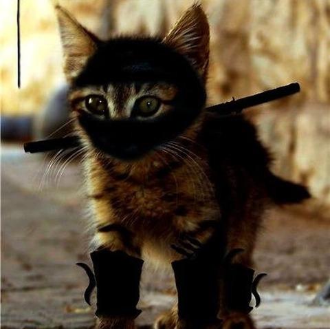 猫の忍者に狙われてた人ってもう生きてないのかな