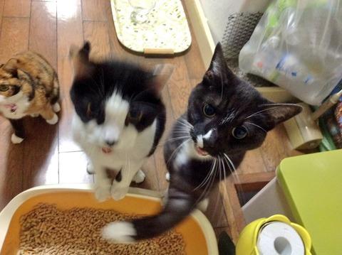 本気の猫パンチwwwww5
