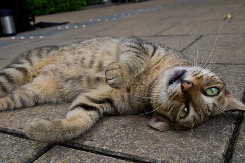 一番かわいいネコの画像5