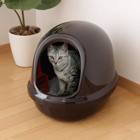 ネコって朝自分のウンコ消滅するのどう思ってるの?
