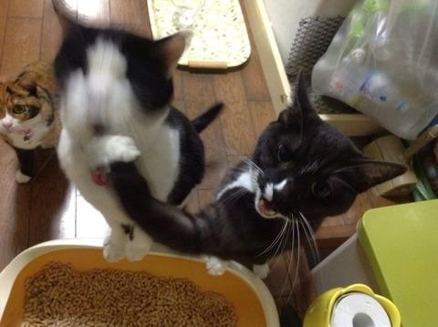 本気の猫パンチwwwww4