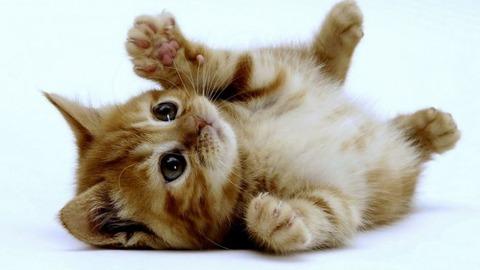 一番かわいいネコの画像