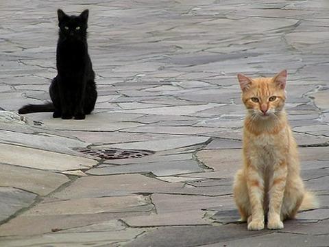 一番かわいいネコの画像6