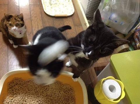 本気の猫パンチwwwww2