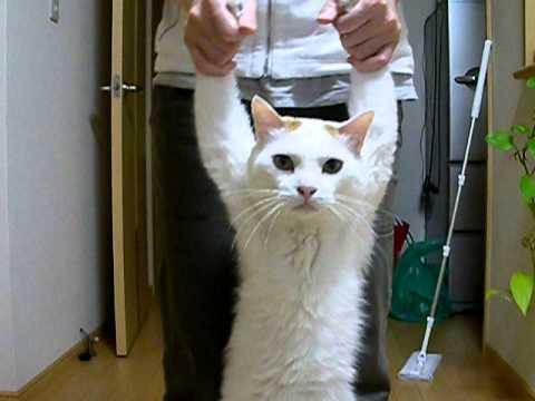 ネコは人間を監視するために送り込まれたエイリアン