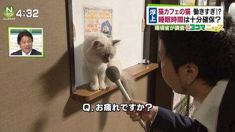 猫カフェの猫、働きすぎて労働基準違反か