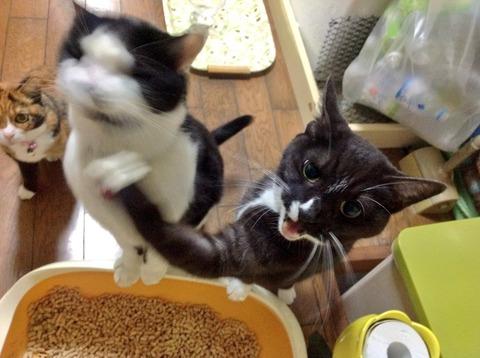 本気の猫パンチwwwww7