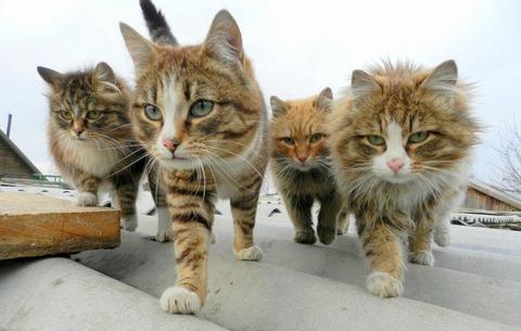 一番かわいいネコの画像11