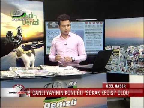 ニュース生放送中、机の上に子猫が迷い込む
