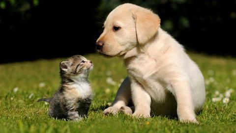 一番かわいいネコの画像8