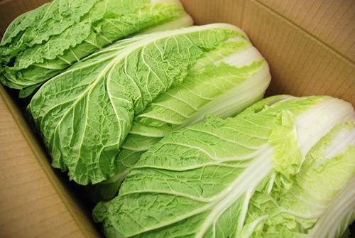ヤフオクで売ってる巨大な白菜