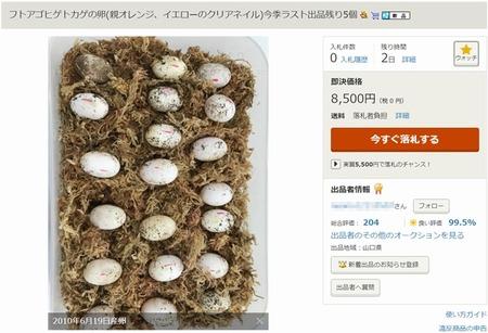 ヤフオクに「トカゲの卵」が出品されてるけど爬虫類は出品禁止だよね?なんで削除されないの?
