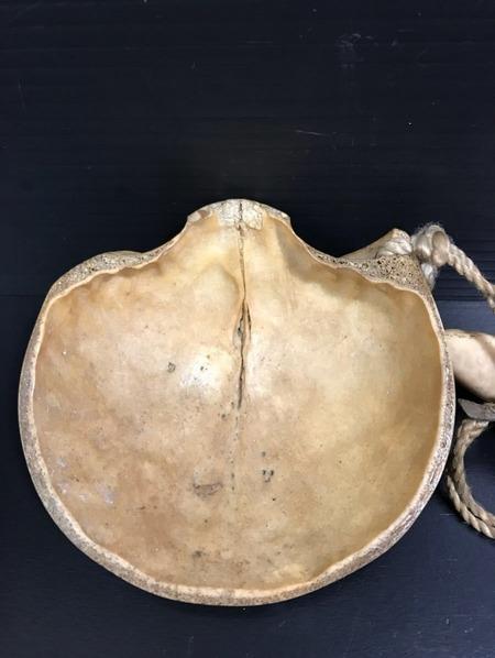頭蓋骨で出来た盃「髑髏杯」がヤフオクに出品3