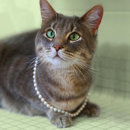 ジュエリーと猫を同時に落札できる里親募集プロジェクト2
