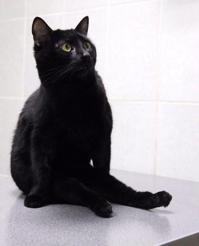 命を救ってくれた診療所で患者さんたちのために働く黒猫さん