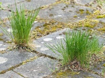 メルカリで庭の草が2万で売れてワロタWWWWW