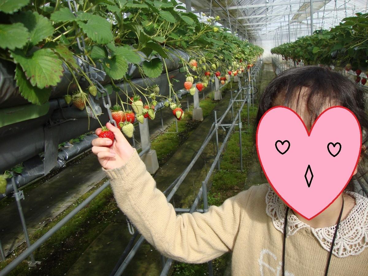イチゴ狩り24,2,26岡山 (1) - コピー