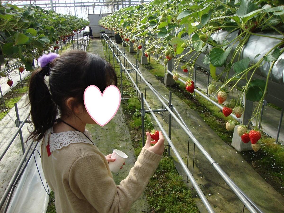 イチゴ狩り24,2,26岡山 (2) - コピー