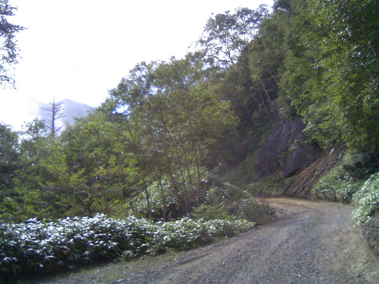 野洲原林道1
