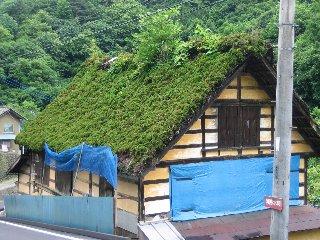 屋根から木が