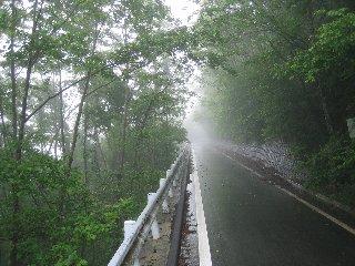 水が森林道