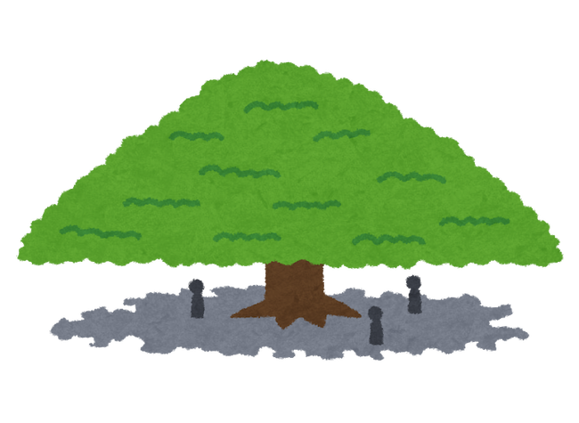 nemunoki_monkey_pod_tree