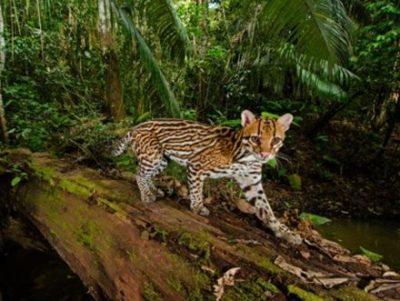 【実験】アマゾンの動物たちが鏡を見たらどうなるか ⇒